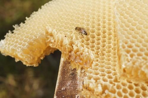 ハチミツたっぷりです